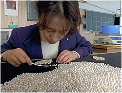 Our worker sorting the pearls